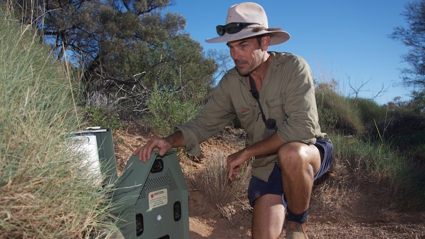 A man wearing Khaki and a hat kneeling down in the bushes with his hand on a green device.