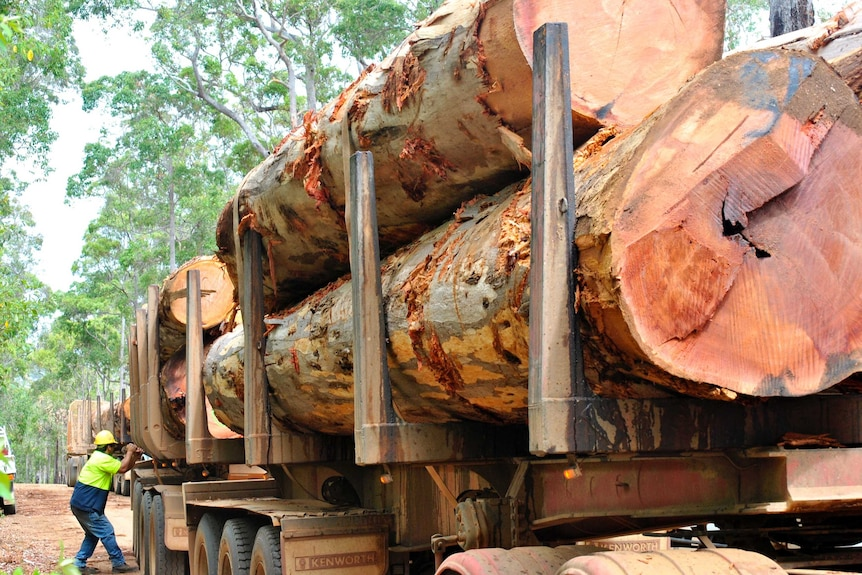 Large karri logs sit on the back of a truck