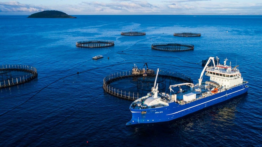 Large ship next to a fish farm pen in the ocean.