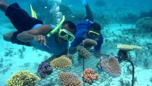 "A marine biologist, known as ""the coral gardener"", is working to save Fiji's reefs"