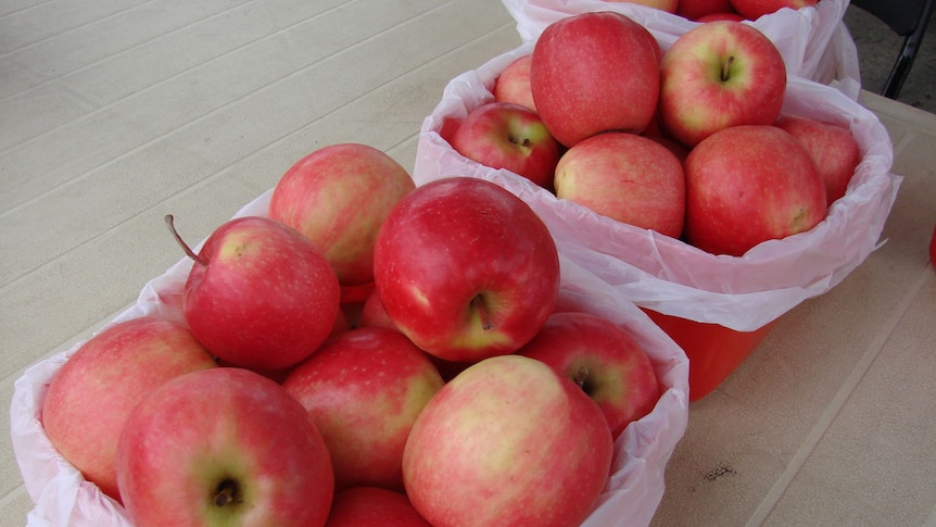 Bags of red apples sit on a table.