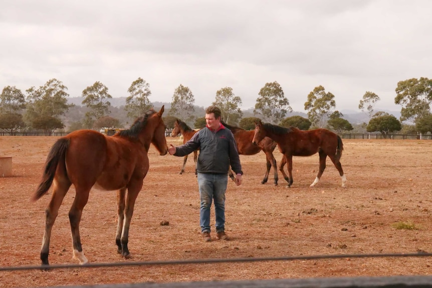A man in a paddock surrounded by brown horses.