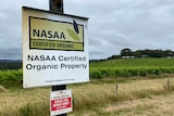 A signpost at the boundary of a vineyard declares it NASAA certified organic