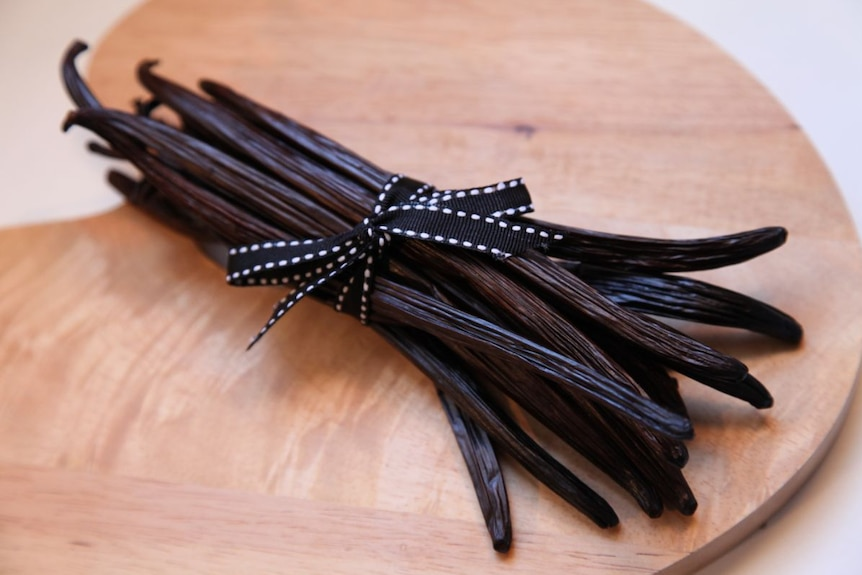 A bunch of dried dark brown vanilla beans tied with a black and white ribbon, on a wooden table.