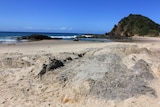 Nobbys Beach where the whale carcass has been buried