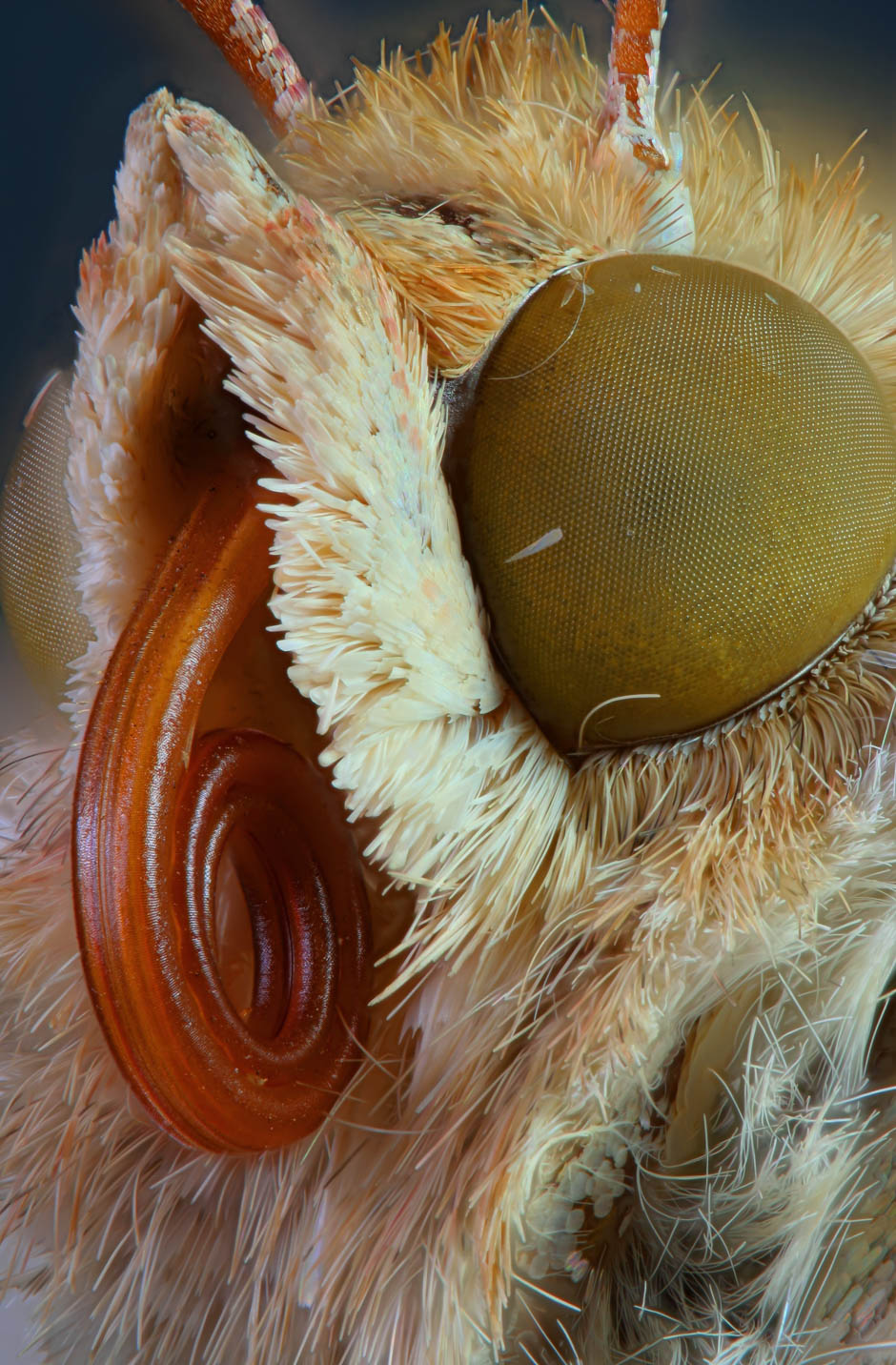 The Face of a Moth
