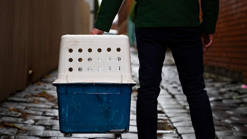 A man holds a dog crate in an alleyway.