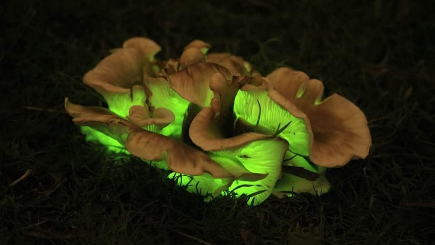 Night shot of fungi growing out of the ground with glowing green light