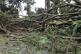 A man surveys the damage caused by Cyclone Marcus.