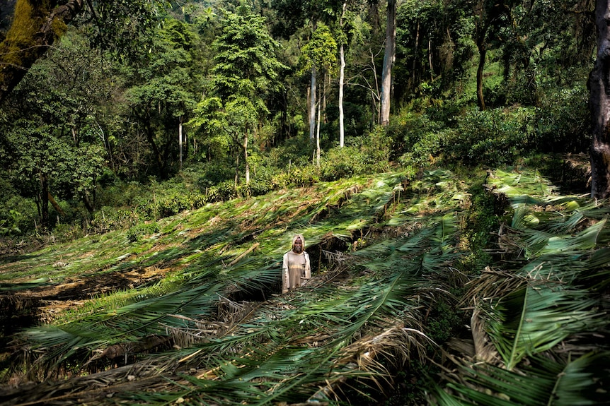 A man stands in the middle of a coffee plot surrounding by thick rainforest.