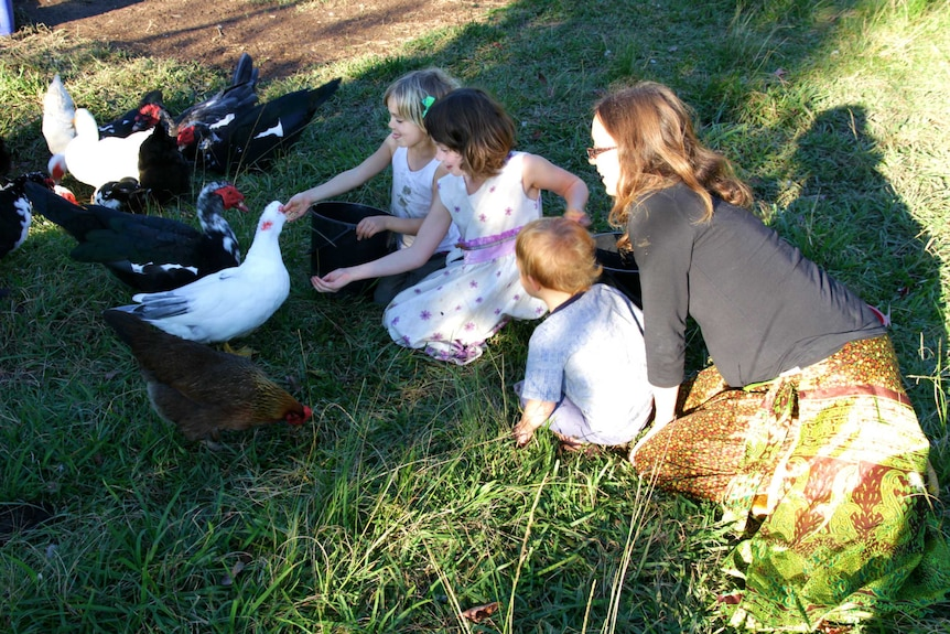 Mother, daughters and a toddler hand feeding their muscovy ducks in the dappled sunlight on their farm