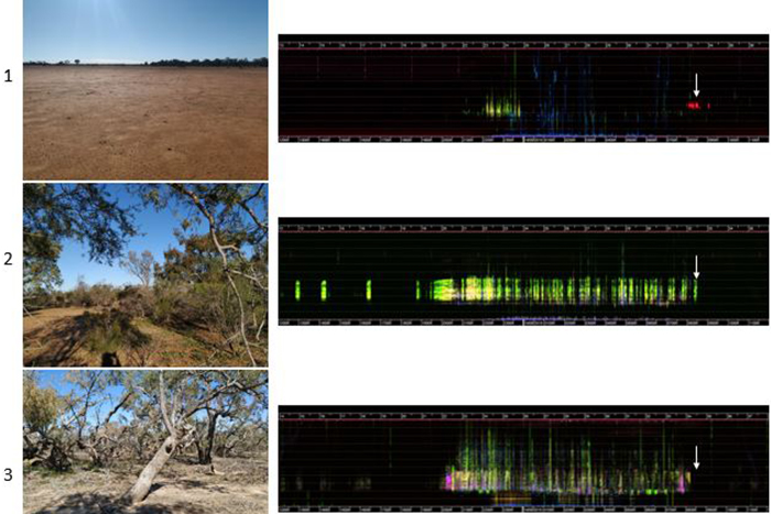 Spectrograms showing the sound of three landscapes
