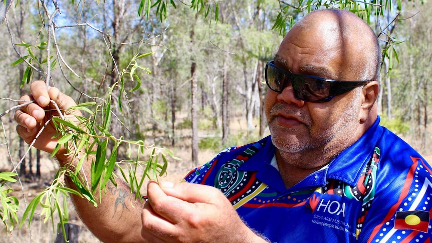 A man wearing a blue shirt and sunglasses looks closely at a tree branch in his hands