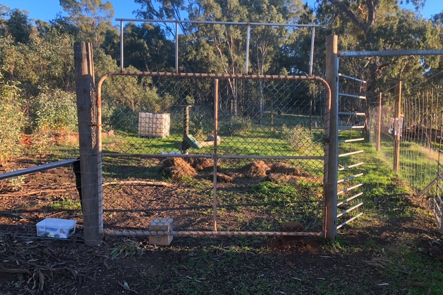 A series of fences and gates making an enclosure, trees and bushland behind