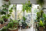 Trees and plants in an apartment.