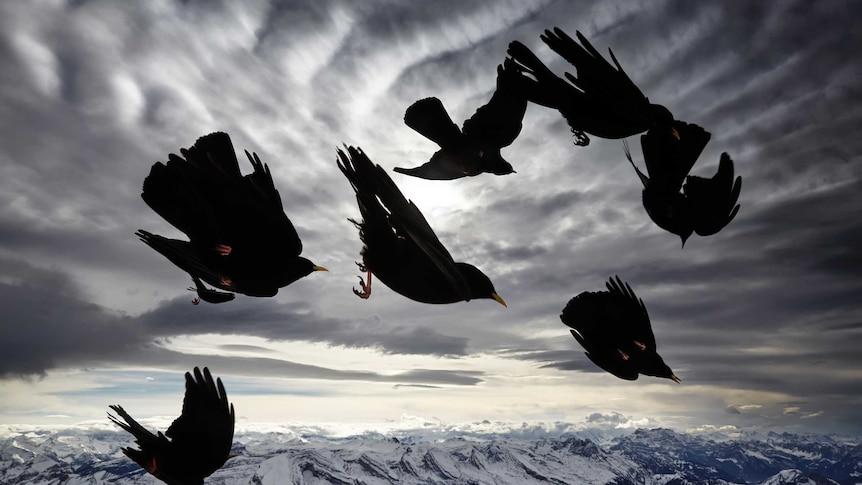 Black birds in sky above mountains