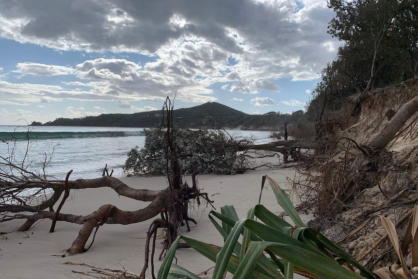 Trees and rocks litter the sand between Clarks Beach and the Byron Bay township