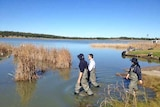 Federal Environment Minister Mark Butler wades into the lower lakes of the Murray