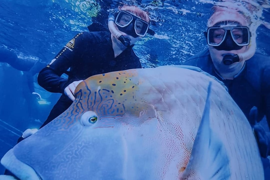 Two snorkellers with large fish