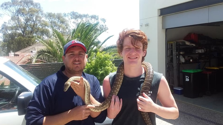 Python reunited with family in Adelaide