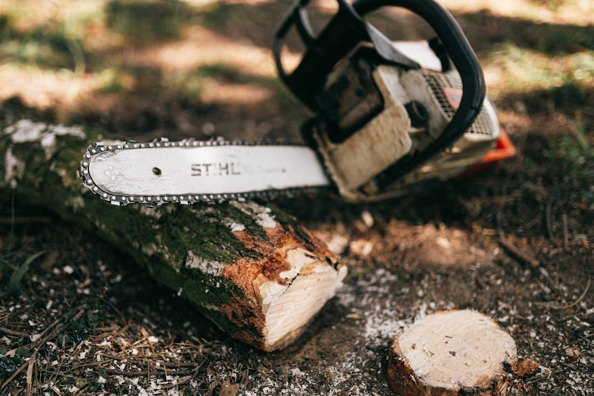 A chainsaw resting on a log that's been sawn in half.