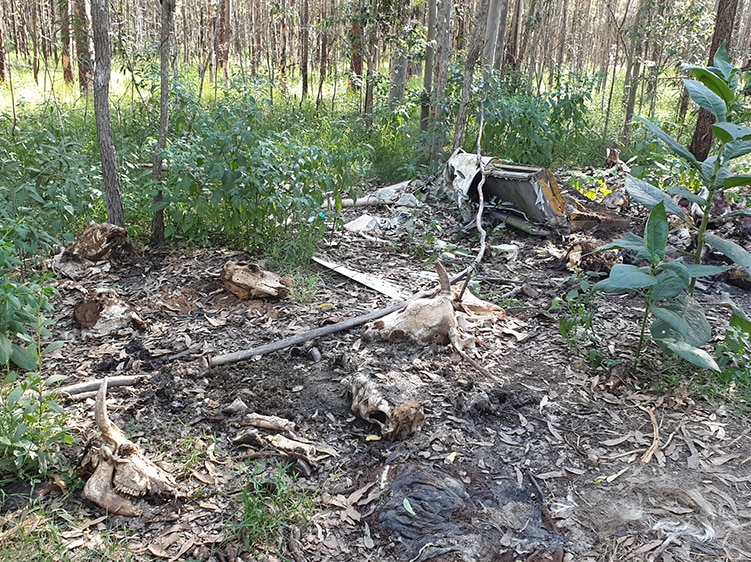 Livestock carcass dumping ground in state forest.
