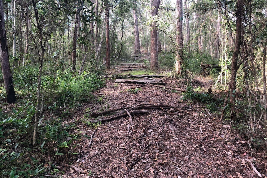 An image showing a trail covered with leaves and trees to on a dirt trail surrounded by bush in Toohey Forest.