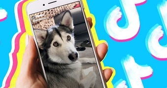 A picture of a dog on a phone with bright blue, pink and yellow in the background.