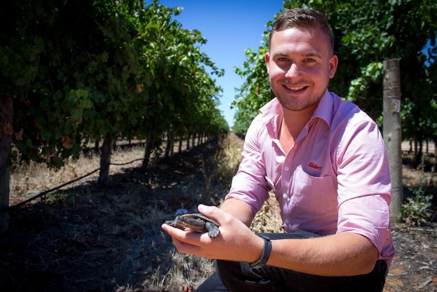 Jesse Watson with his pet turtle Skipper among grape vines.
