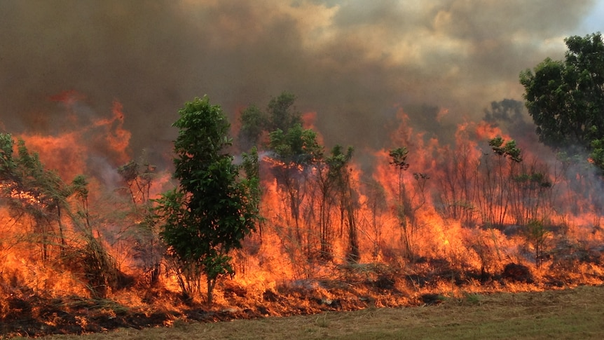 A tall and hot fire raging through the bush.