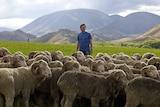 Jeremy Moon standing on a farm with merino sheep