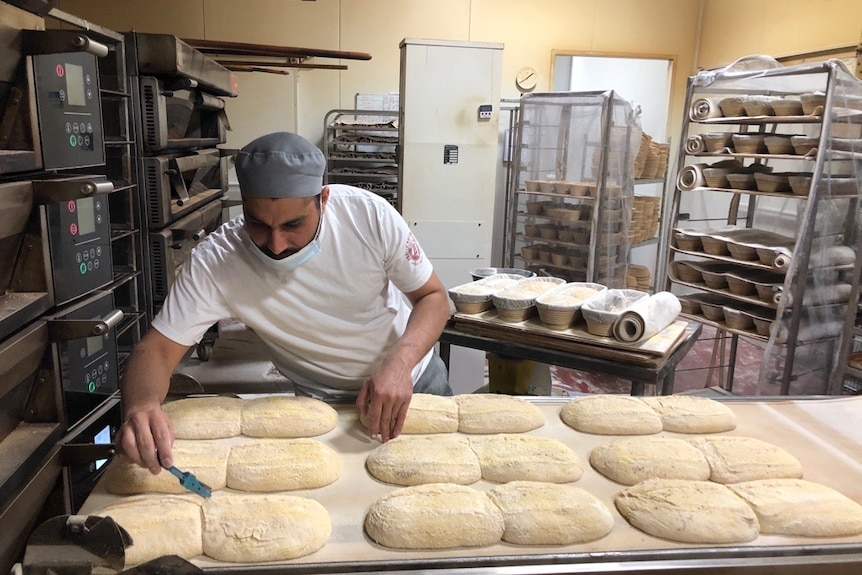 A baker looks over loaves of uncooked bread