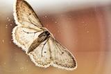 moth on a window
