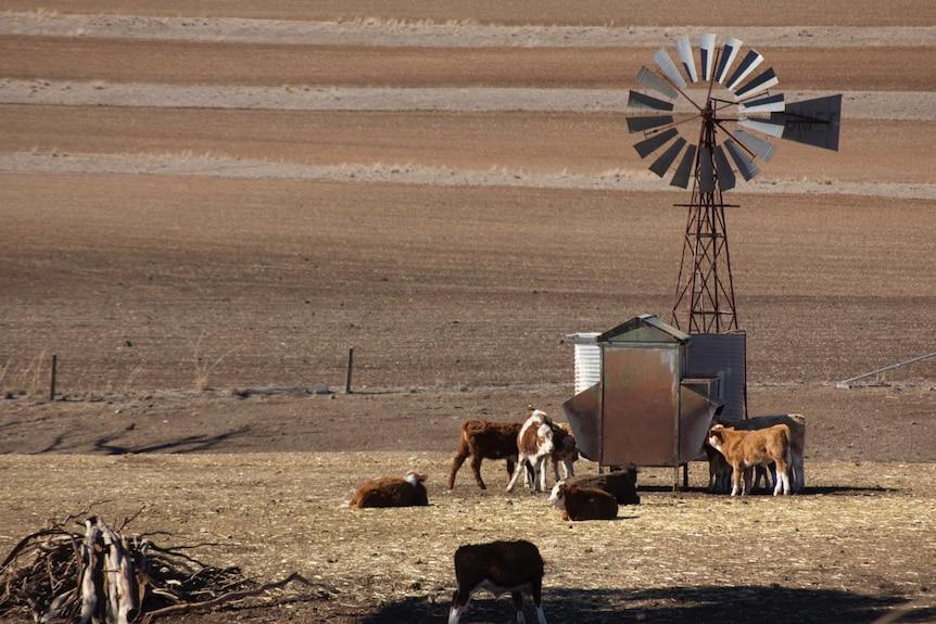 Dry paddocks and windmill