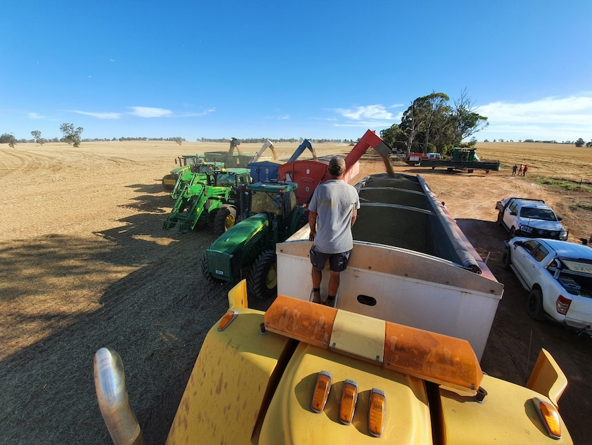 An alignment of four tractors and hunting bins unloading the grain.