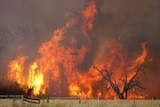 Professor Field says that a warming planet will dry out forests in tropical areas, making them much more likely to suffer from bushfires.