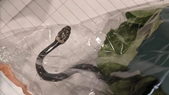 A snake inside a plastic bag on a notebook