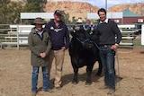 Belinda and Brad Seymour stand beside a black bull and the bull's breeder Trent Walker
