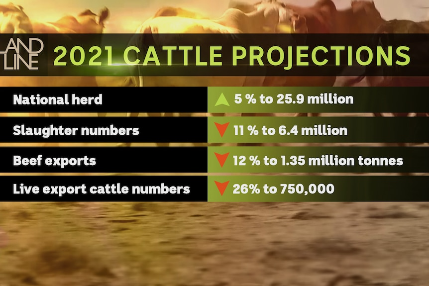 Slide showing MLA cattle projections