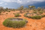 Spinifex Ring