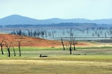 A low dam with dead trees exposed.