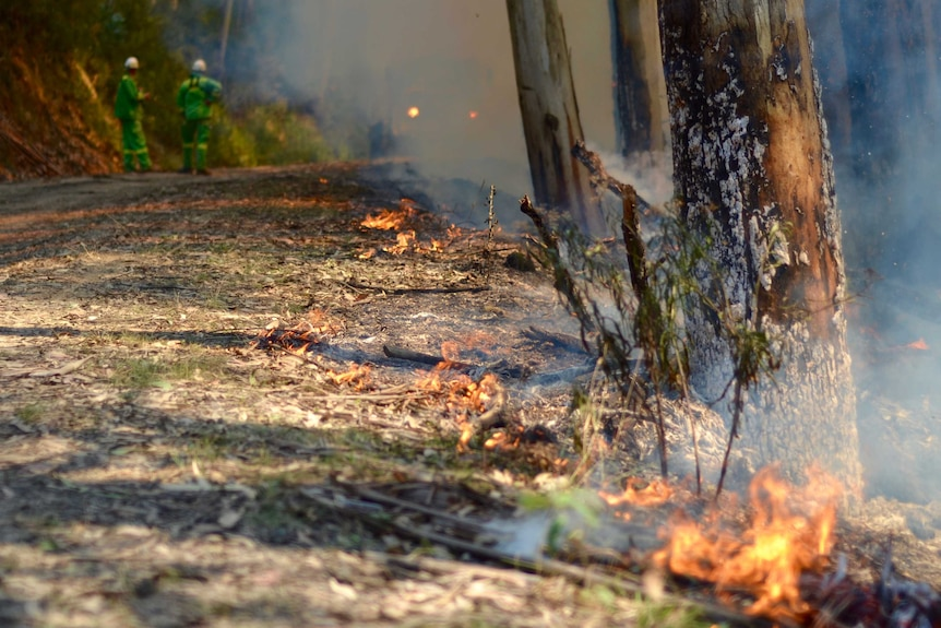 Fire by the side of a road in a planned burn between Kennett River and Wye River.