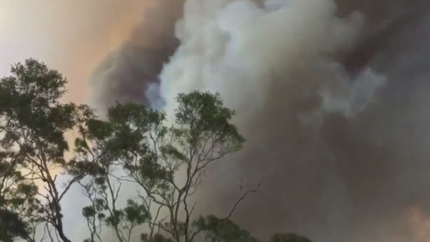 Locals capture NSW fires approaching homes in Tathra, NSW