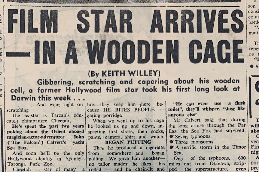an old newspaper story with 'film star arrives in a wooden cage' on the front.