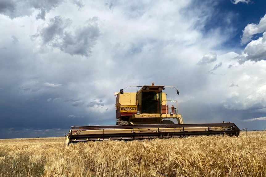 A harvester in a paddock with dark clouds above.