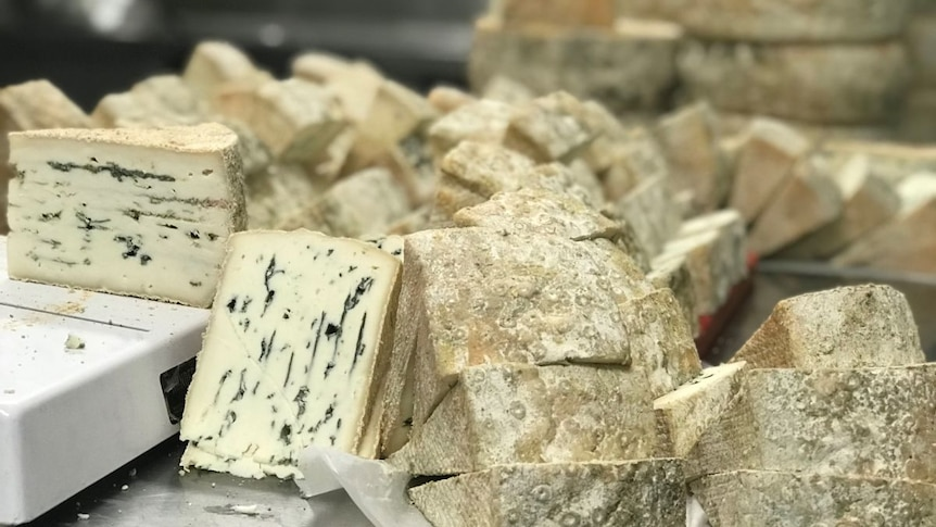 Wedges of blue cheese piled on a metal counter.