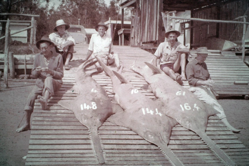 black and white photo of five men sitting on a boat ramp with three huge dead saw fish with their lengths painted on them