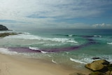 Purple dye shows the flow of a rip current at Tamarama Beach in Sydney in 2010.