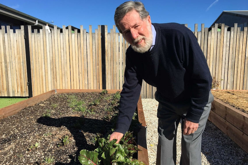 A bearded man leans over touching a spinach leaf in a vegetable garden