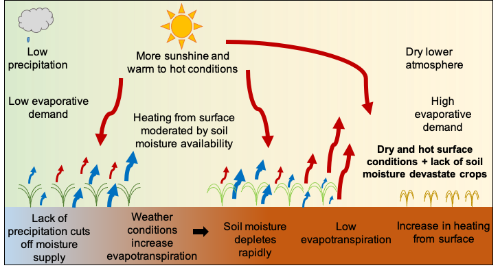 A graphic showing how soil moisture depletes during a flash drought.